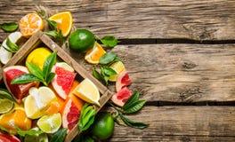 Citrus - grapefrukt, apelsin, tangerin, citron, limefrukt i en gammal ask fotografering för bildbyråer