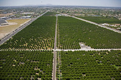 Citrus Groves Stock Images