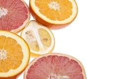 citrus grupp Royaltyfri Foto