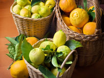 Citrus harvest Stock Photos
