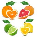Citrus hearts Stock Photo
