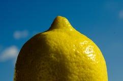 Citrus i solen - citron arkivfoto