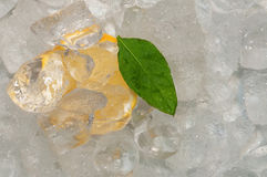 Citrus in ice Stock Photography