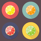 Citrus Icon Collection Royalty Free Stock Photo