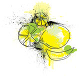 Citrus illustration Royalty Free Stock Photography
