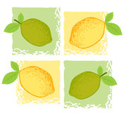 Citrus illustration Stock Photos