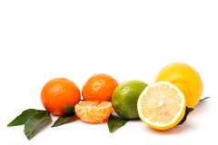 Citrus isolated on white background Royalty Free Stock Photos
