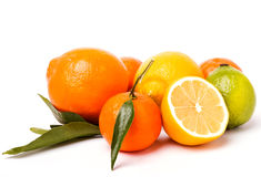 Citrus isolated on white background Stock Photos