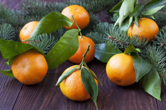 Citrus just from the tree. Winter fruits Royalty Free Stock Image