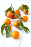 Citrus just from the tree. Winter fruits. Royalty Free Stock Photos