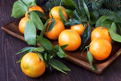 Citrus just from the tree. Winter fruits. Stock Photo