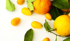 Citrus leaves. Citrus with leaves on a white background Stock Photo