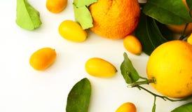 Citrus leaves Stock Photo