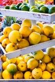 Citrus - lemons Royalty Free Stock Photo