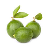 Citrus lime fruit Royalty Free Stock Photography