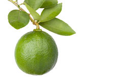 Citrus lime fruit isolated on white background Royalty Free Stock Image
