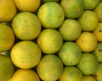 Citrus limetta, alternatively considered to be a cultivar of Citrus limon, C. limon `Limetta`, is a species of citrus, commonly kn Stock Photography
