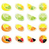 Citrus logos and icons. Logos and icons of lemon, orange, lime and grapefruit Royalty Free Stock Photos