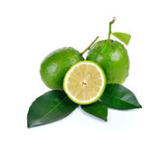 Citrus medica   Linn on white background Stock Photos