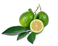 Citrus medica   Linn on white background Stock Image