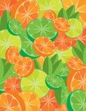 citrus mix royaltyfri illustrationer