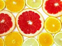 Citrus modell av apelsin- och grapefruktskivor Royaltyfria Bilder