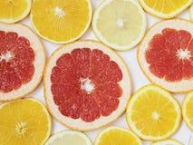 Citrus modell av apelsin- och grapefruktskivor Royaltyfri Bild