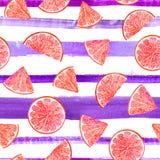 Citrus modellgrapefrukt för vattenfärg, blom- sömlös modell, botanisk naturlig illustration på det ultravioletta bandet royaltyfri bild