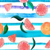 Citrus modellgrapefrukt för vattenfärg, blom- sömlös modell, botanisk naturlig illustration på det violetta bandet för turkos royaltyfri bild