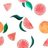 Citrus modellgrapefrukt för vattenfärg, blom- sömlös modell med filialen, botanisk naturlig illustration på vit royaltyfri bild