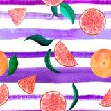 Citrus modellgrapefrukt för vattenfärg, blom- sömlös modell med sidor, botanisk naturlig illustration för filial på royaltyfria foton