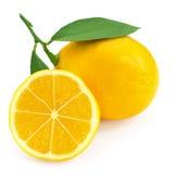citrus ny citron Arkivbilder