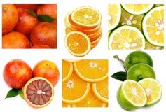 citrus orange pamela för samlingsgrapefruktcitron Arkivbild