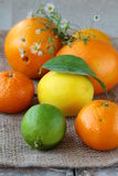 Citrus - orange, tangerine, lemon, lime Royalty Free Stock Image