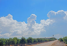 Citrus orchard and processing plant. At Israel royalty free stock photography