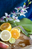 Citrus with orchid royalty free stock photos