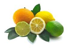 Citrus på vitbakgrund Royaltyfri Foto