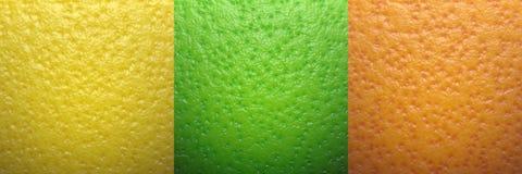 Citrus peels. Lime Orange Grapefruit outer skin stock illustration