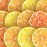 Citrus- plakkenassortiment Stock Fotografie