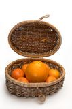 Citrus plants. In a basket royalty free stock images