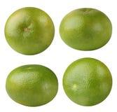 Citrus raring Pomelit, citrus ` Oroblanco som isoleras på en vit Arkivbilder