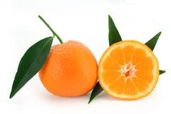 citrus reticulata för mandarinorange Arkivbild