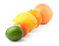 Citrus in row Stock Photography