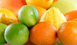 citrus samling Royaltyfri Fotografi