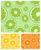 Citrus seamless background Stock Image