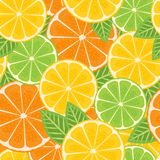 Citrus seamless background Stock Images