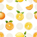 Citrus seamless pattern. Stock Images