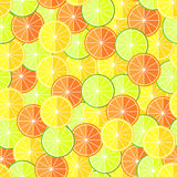 Citrus seamless pattern Royalty Free Stock Image