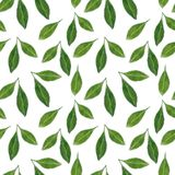Citrus leaves seamless pattern. Hand drawn watercolor illustration royalty free illustration