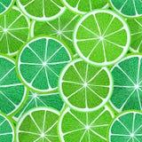 Citrus seamless vector pattern Stock Image